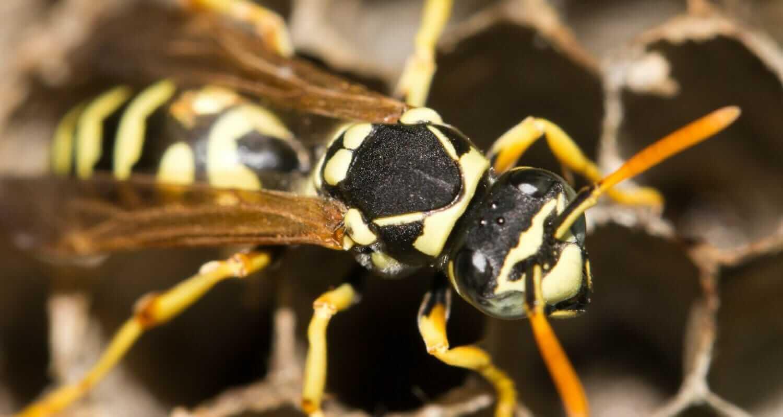 Common Pests In Memphis