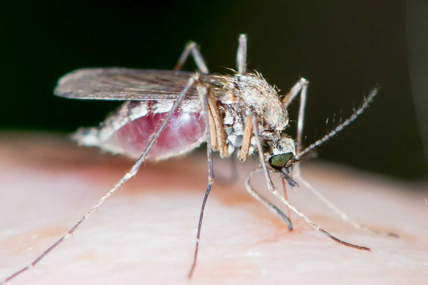 """Featured image for """"Mosquito Treatment and Control Services"""""""