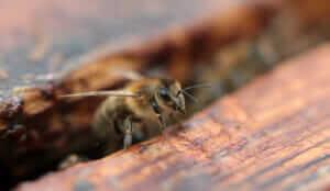 Bees Pest Control Memphis