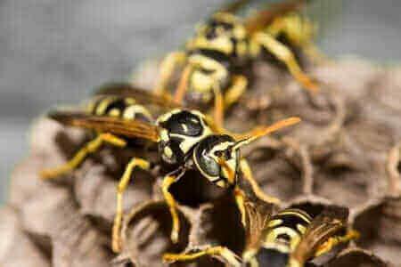 common pests