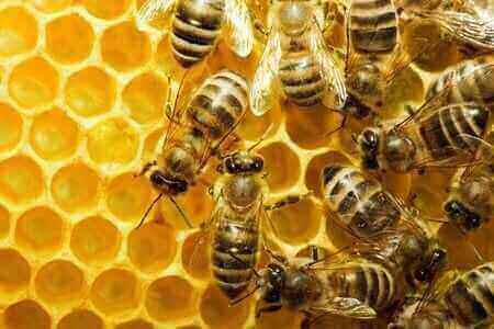 """Featured image for """"Bees"""""""