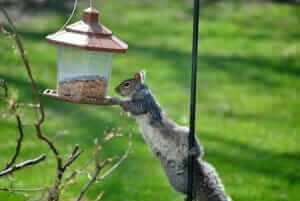squirrels and bird feeders