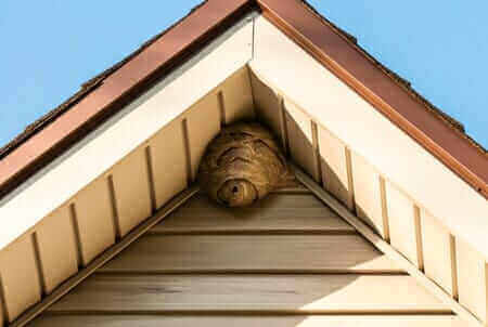 Wasp Nest Removal Foundation Pest Control