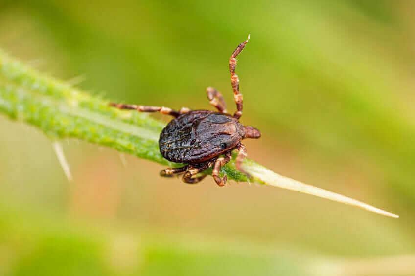 Common Pests Foundation Pest Control Memphis Tn