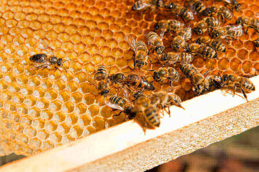 bee and wasp stings Foundation Pest Control