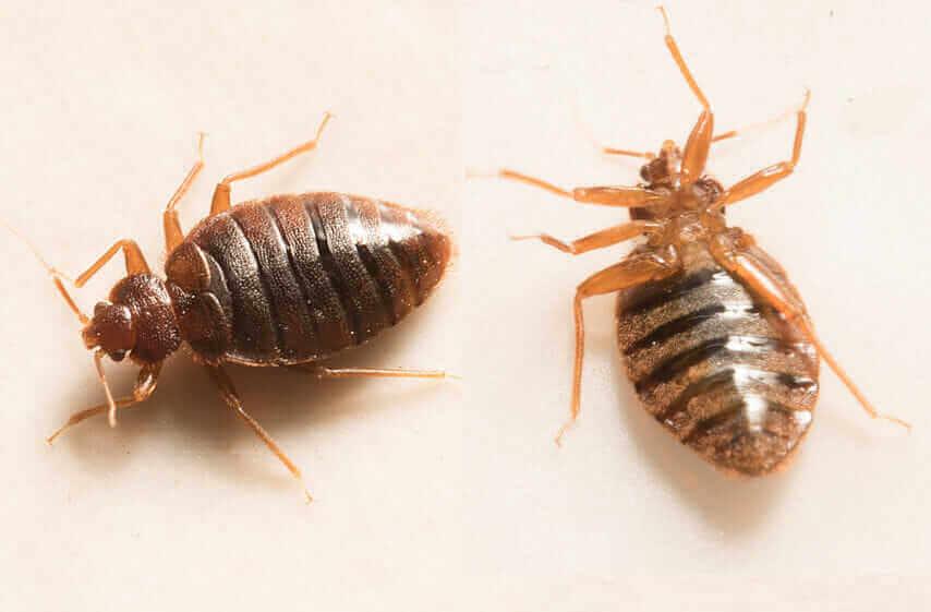 pest professional Foundation Pest Control