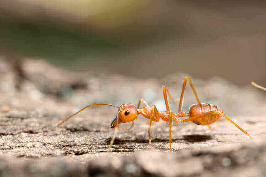"""Featured image for """"Fire Ants"""""""