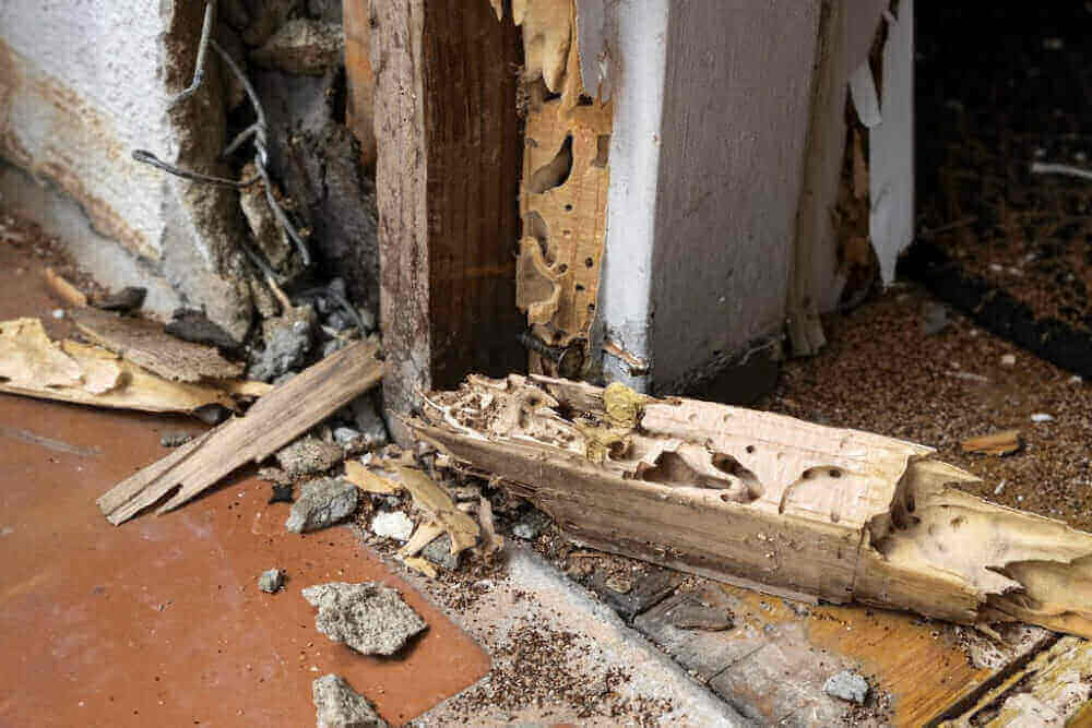 Foundation Pest Control Treating Termites in the Winter