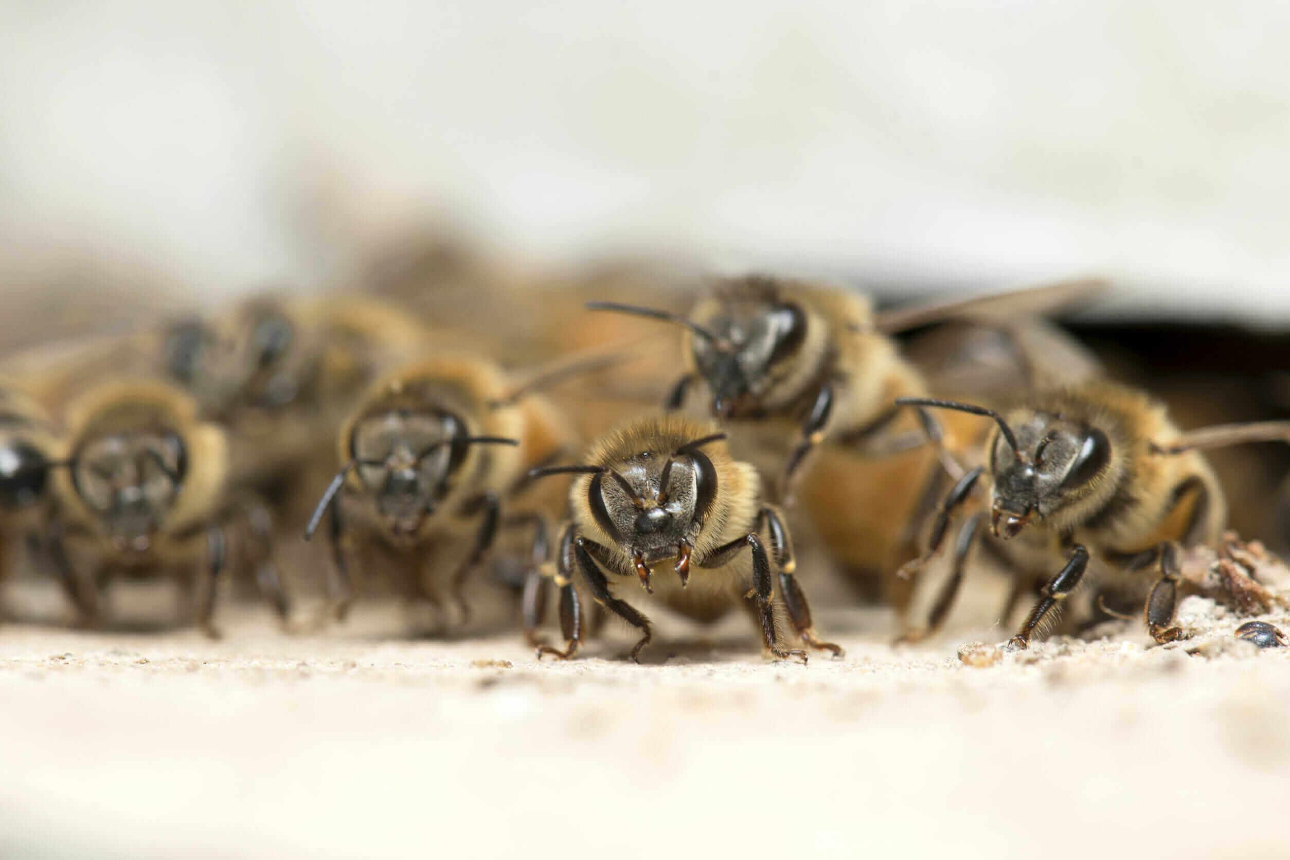invasive species Foundation Pest Control