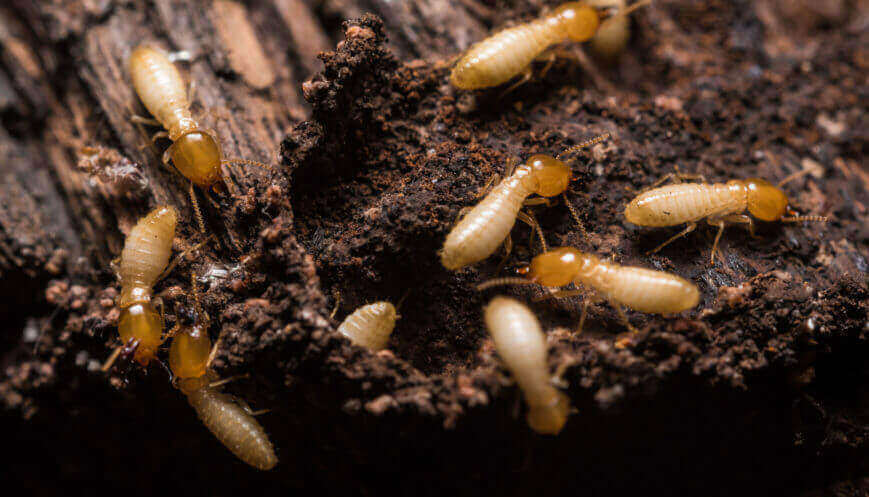 Treat Termites In Winter Foundation Pest Control