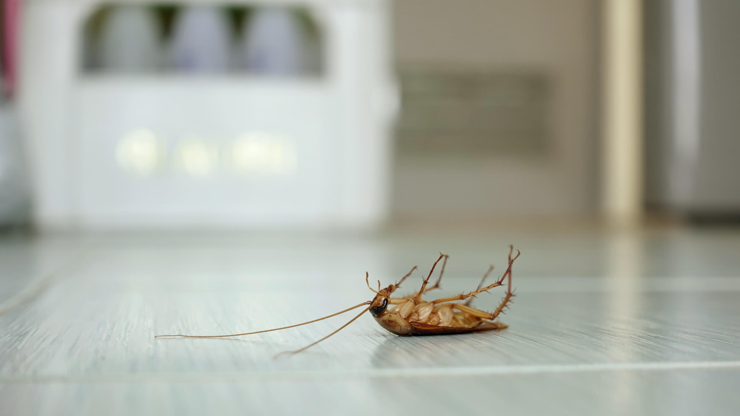 google guaranteed Foundation Pest Control