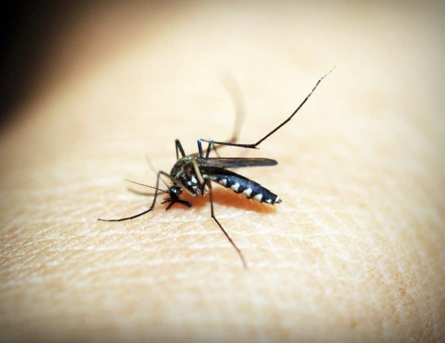 Prepare for Mosquito Season -Foundation Pest Control