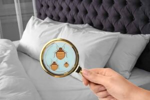 how to kill bedbugs Foundation Pest Control Memphis